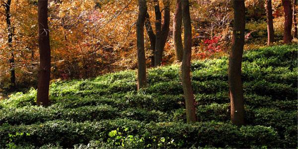 南京老山国家森林公园地位于南京市浦口区,森林覆盖率85%以上,园内图片