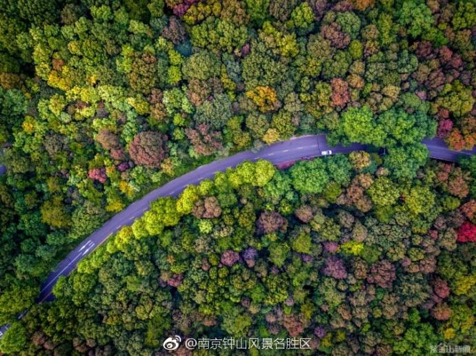深秋的紫金山绿色长廊旅游风景道 图片来源于南京钟山风景名胜区官微
