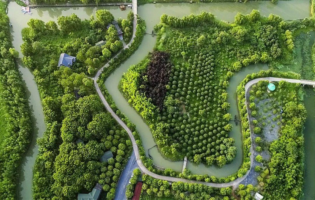 (图为泰州自然风光。图片/视觉江苏网)