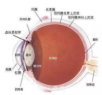 眼球结构图