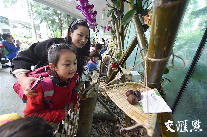 【新华日报】南京的这个植物园里,竟藏了一片热带雨林