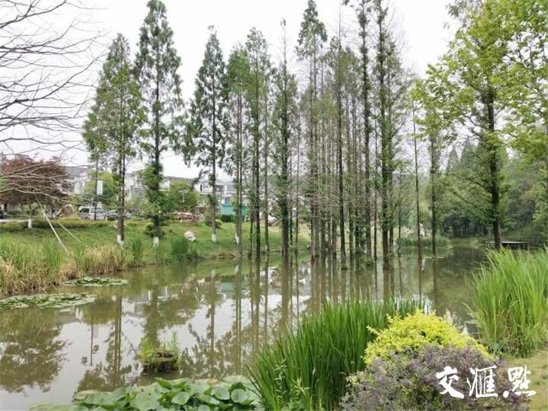 """五分11选5省林木种苗和林下经济产业瞄定""""千亿级"""" 绿树生金"""