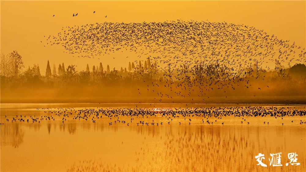 湖南岳阳濠河水域群鸟翔集。杨海波 摄